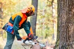7 Chainsaw Safety Tips To Avoid Accidents