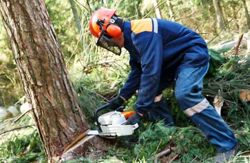 Chainsaw Safety Tips: Wear a proper PPE kit