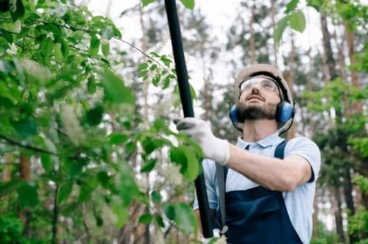 8 Pole Saw Safety Tips and Techniques