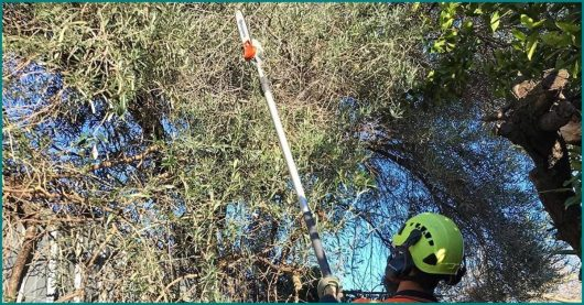 Best Electric Pole Saws of 2021 – Buying Guide & Reviews