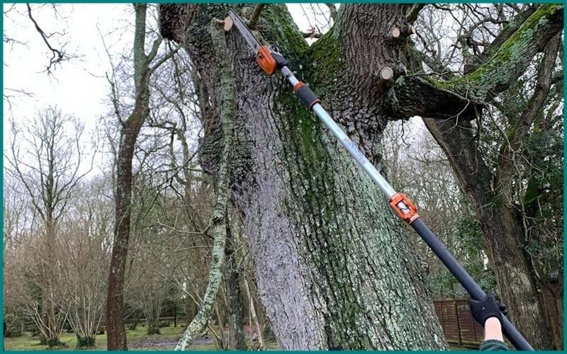 Best Electric Pole Saw Buying Guide